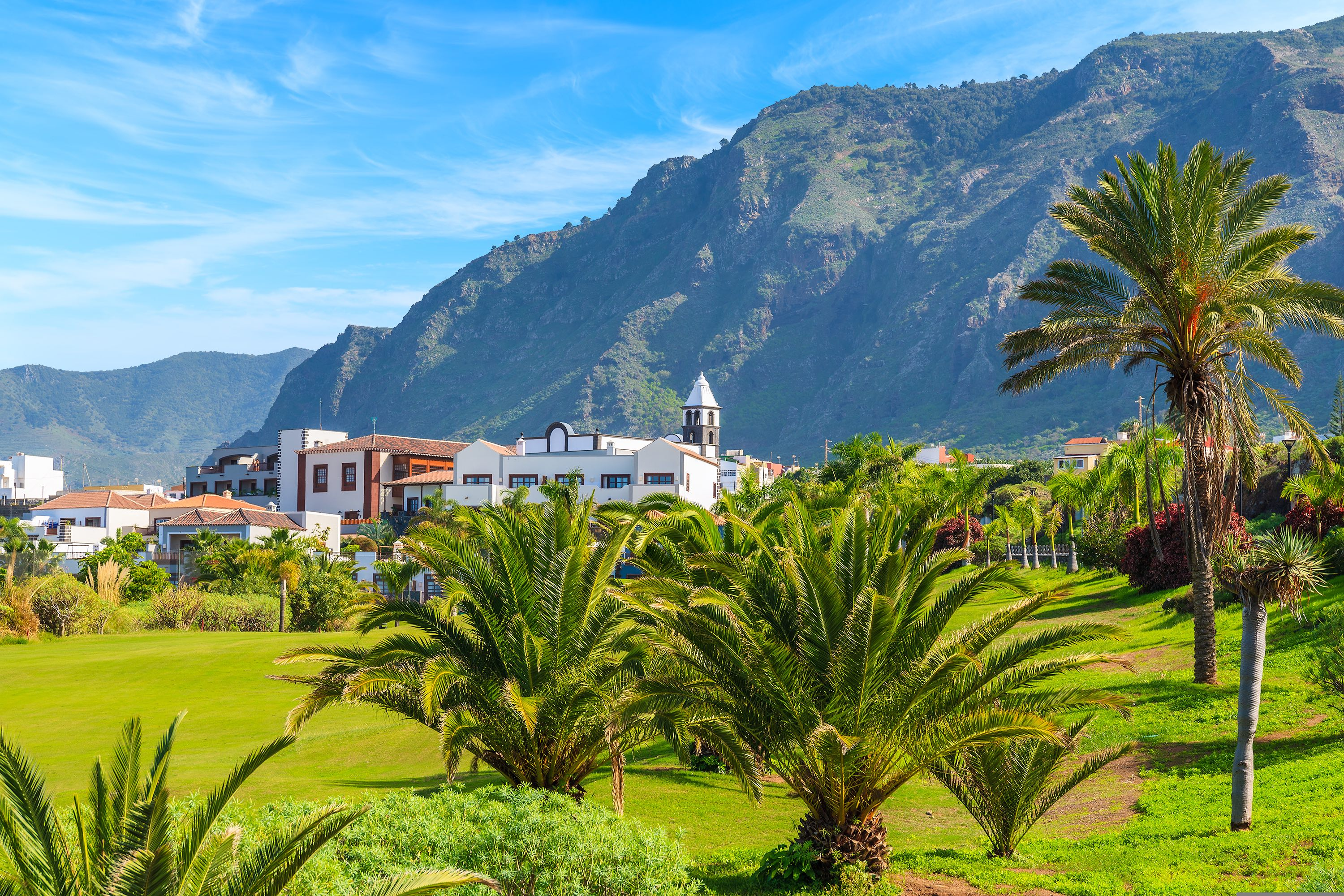 Tropical,Palm,Trees,In,Mountain,Landscape,Of,Northern,Tenerife,With